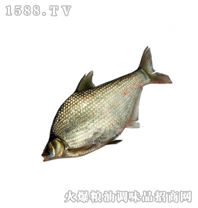杨飞有机鳊鱼