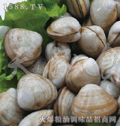 天泓-四角蛤蜊