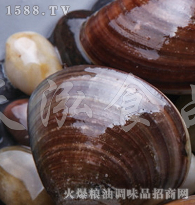 天泓-文蛤