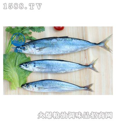 竹荚鱼-瑞兴