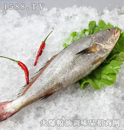 香海�|鱼