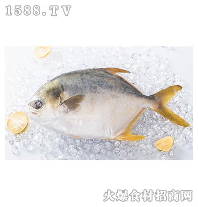 味尔佳金鲳鱼