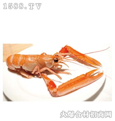 川洋国际海鳌虾