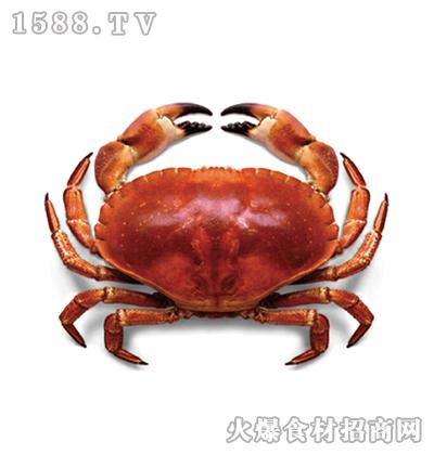 川洋国际黄金蟹