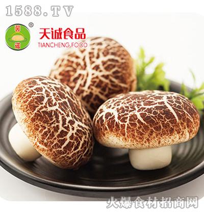 天诚-蘑菇包面点