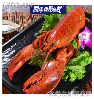 凯洋世界海鲜波士顿大龙虾400g