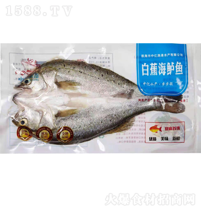 中亿渔港白蕉海鲈鱼