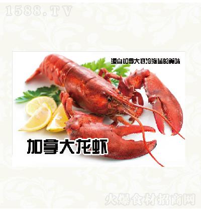中苑食品 加拿大龙虾
