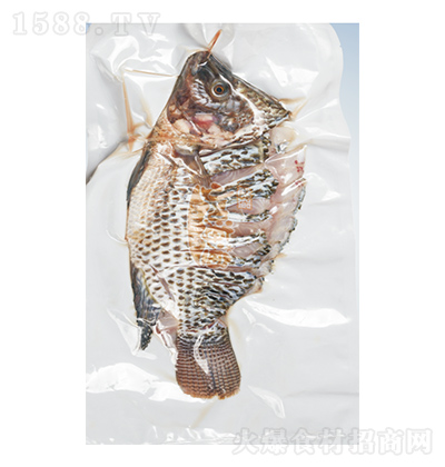 小嗨渔 孔雀斑