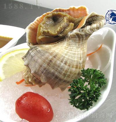 渔凯 去脏带壳海螺