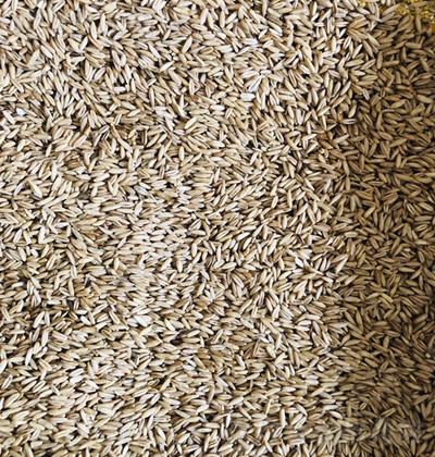 美丽田园 燕麦米