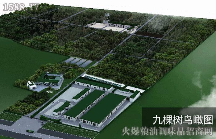 河南九棵树农业发展有限公司