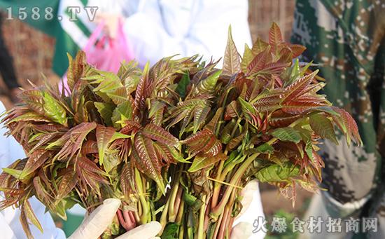 十年树、头茬芽、不腌制|九棵树香椿酱,一款常吃常青春的菜!