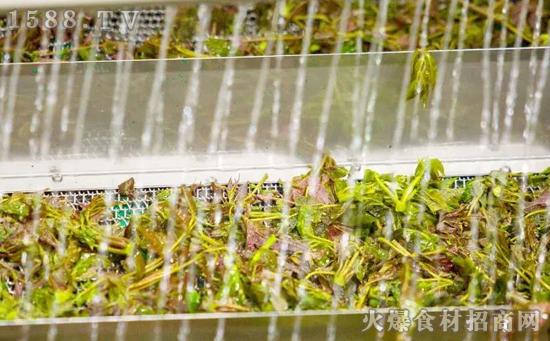 九棵树香椿酱,头茬芽、不腌制,健康又美味!