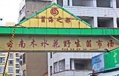 云南昆明木水花野生菌交易市场